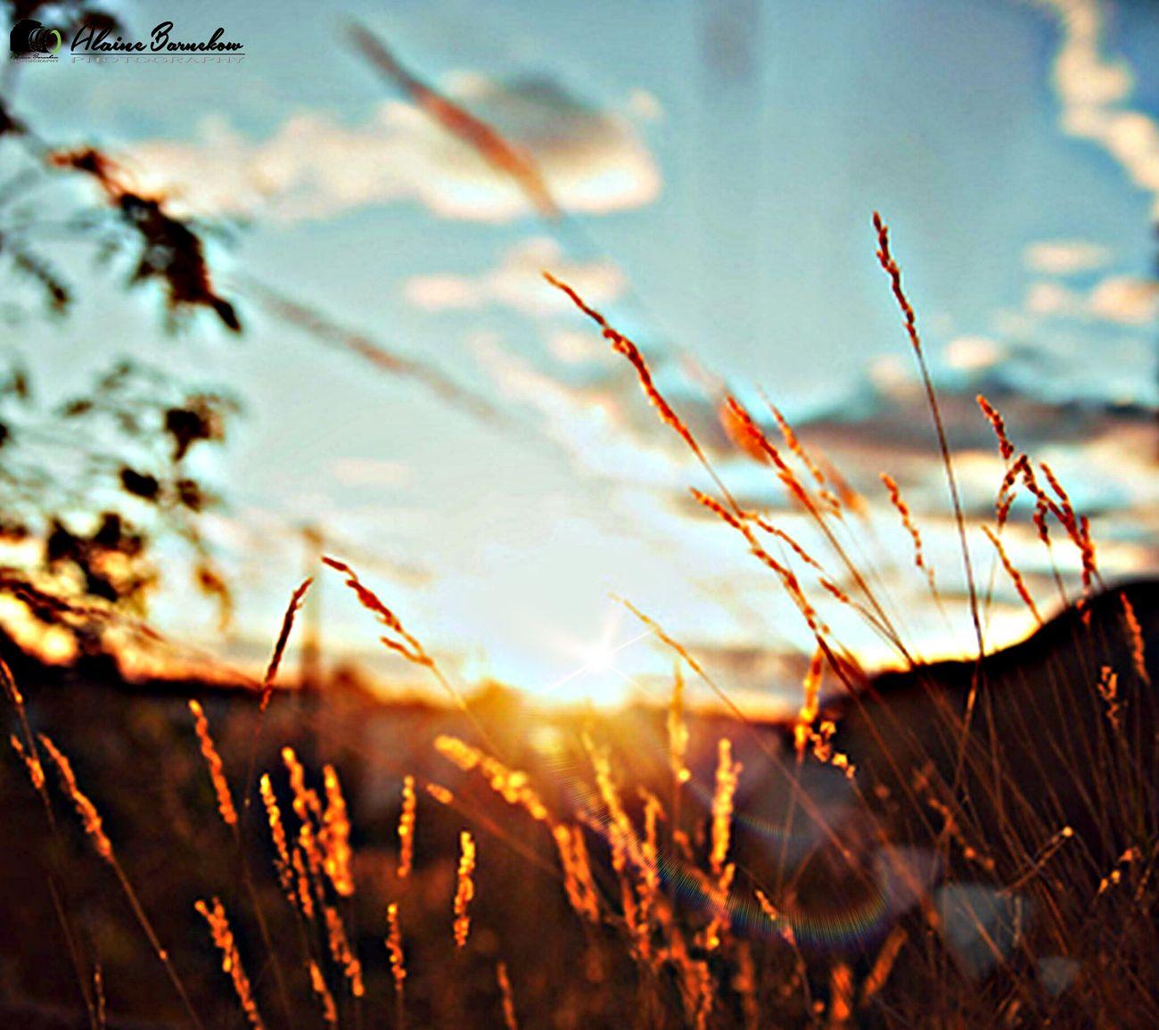 Sunshine ☀ Sun Relax Autimn