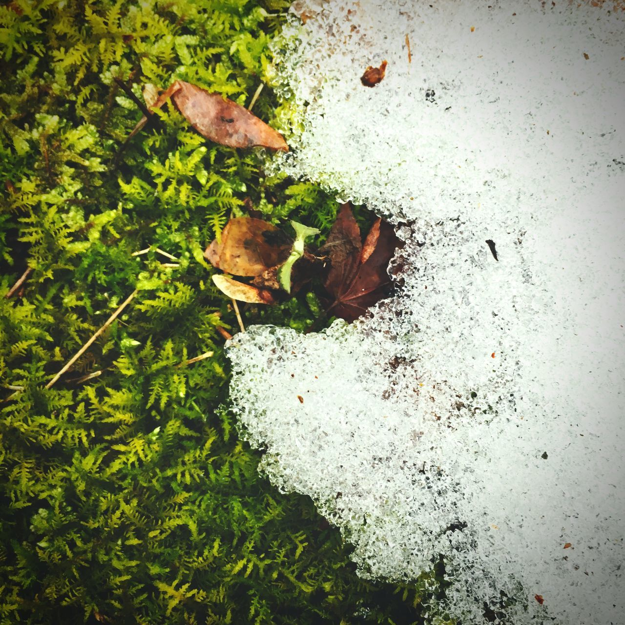 high angle view, no people, nature, green color, leaf, day, close-up, growth, beauty in nature, outdoors, freshness