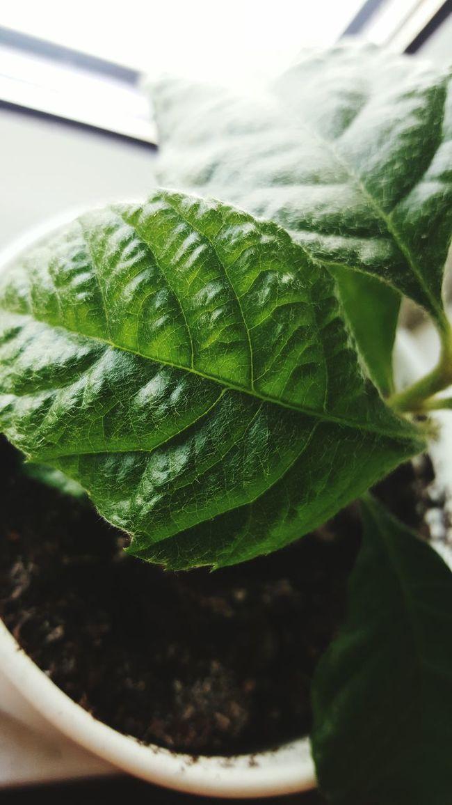 Mispel Mispelchen Medlar Pflanzen Plant Food Offspring Fruit Frucht Senker