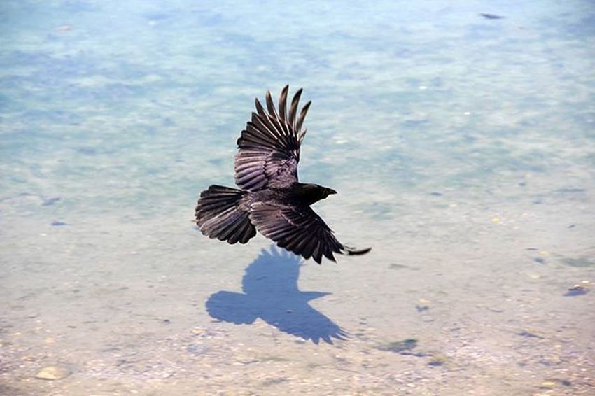 Volo Uccello Nero Bird Fly Acqua Ombra Shadow Riflesso Riflection Two Is Better Than One