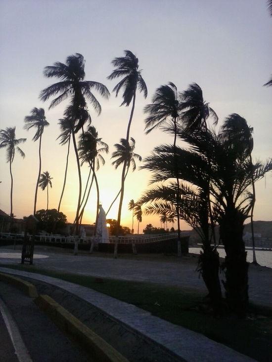 Sunset Palm Tree Sunset No People Day Water Venezuela Lecherías
