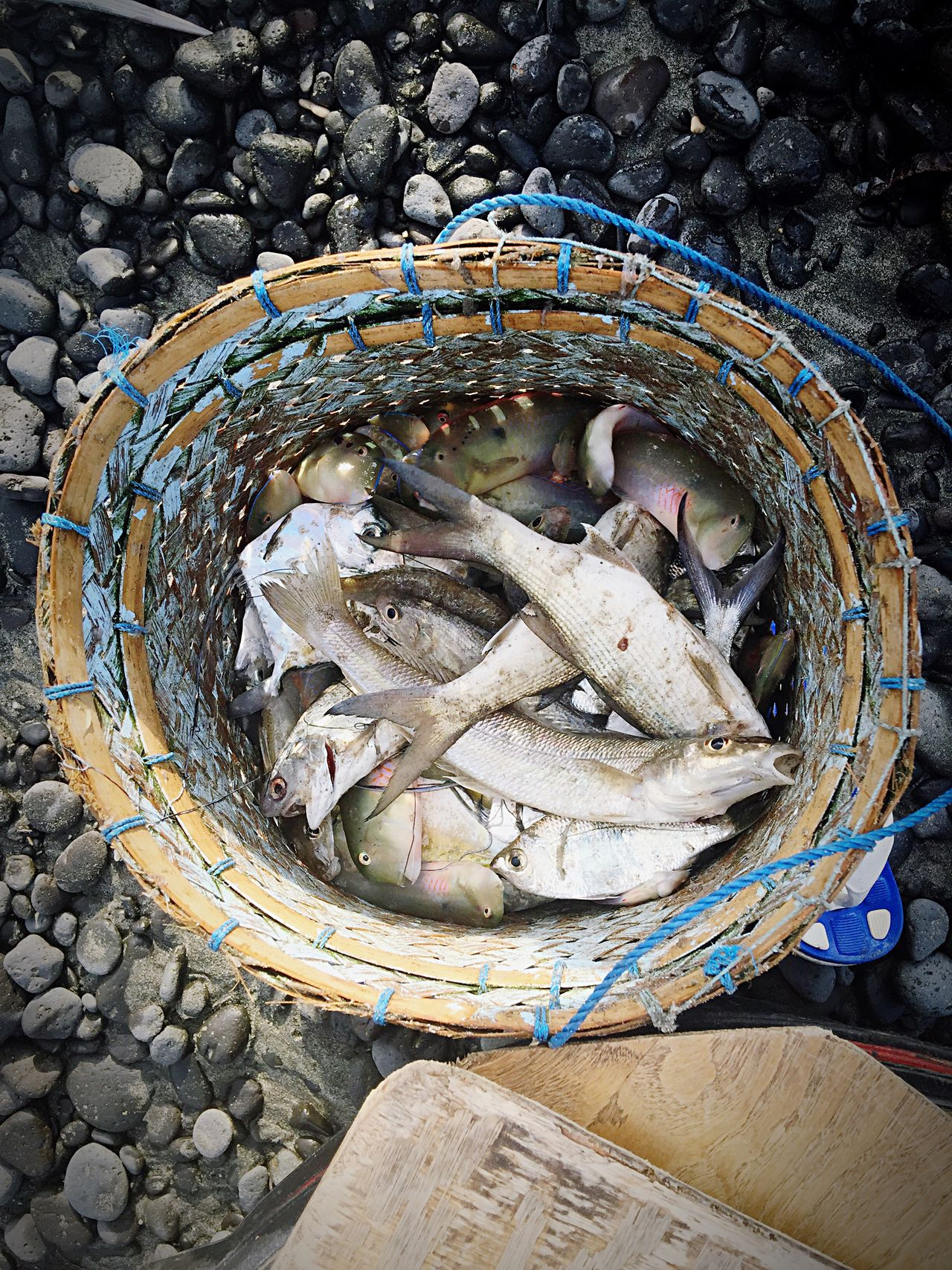 See whats the catch this morning of the Bali's fisherman! Bali Bali, Indonesia Candidasa Bali Candidasa Fish Fishing Traditional Beach Top View Fromabove Bucket Variation IPhoneography IPhone Iphone6