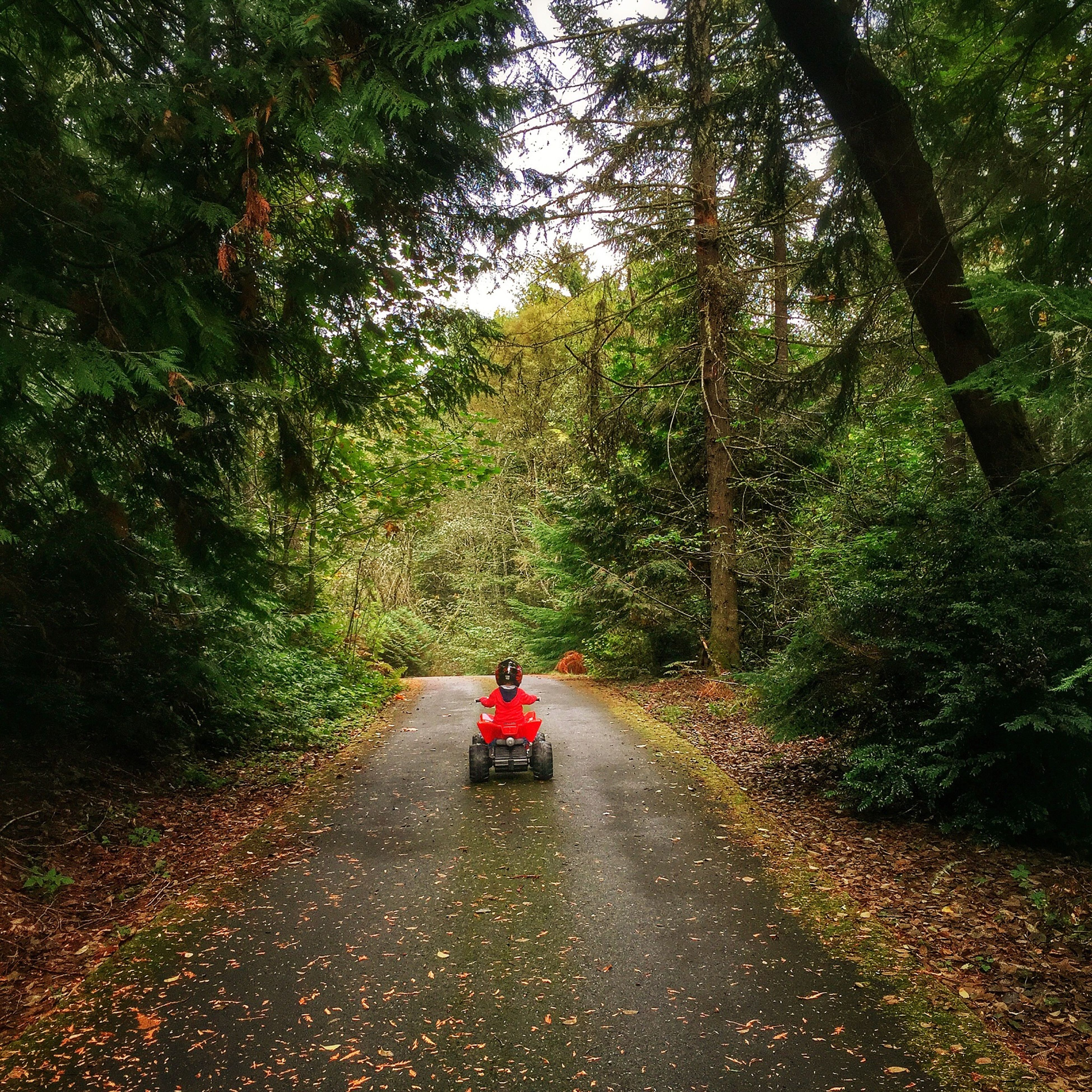transportation, tree, mode of transport, land vehicle, the way forward, road, green color, growth, car, on the move, nature, diminishing perspective, travel, plant, forest, street, country road, tranquility