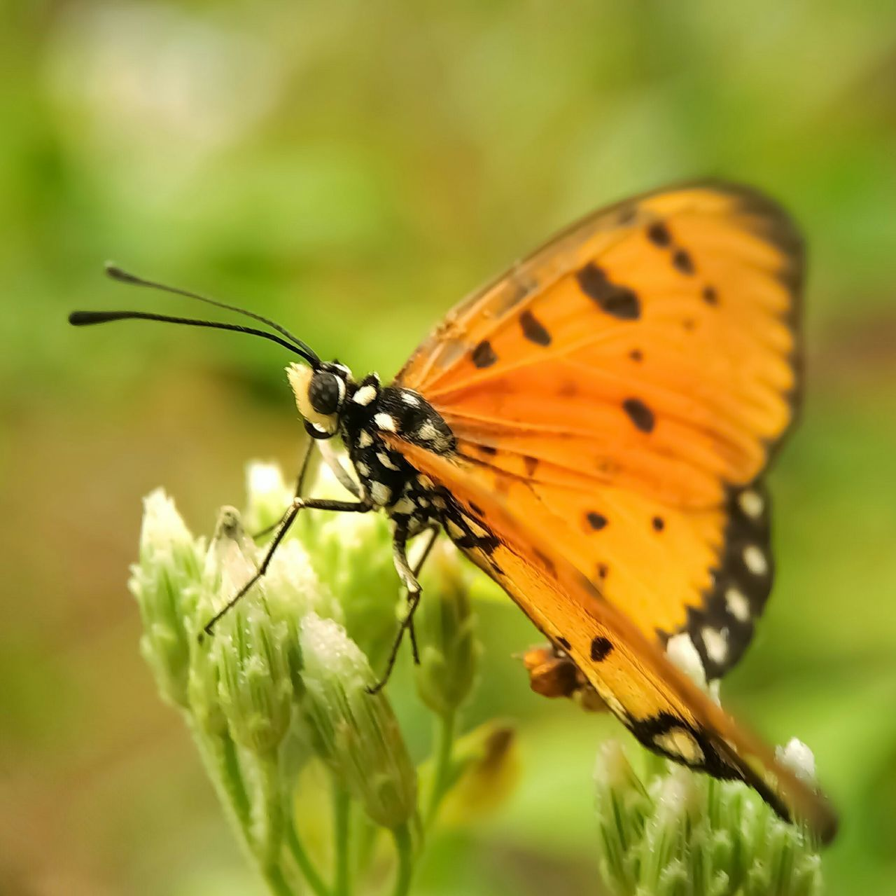 insect, animals in the wild, animal themes, one animal, no people, close-up, nature, animal wildlife, plant, leaf, outdoors, butterfly - insect, day, beauty in nature, fragility, freshness