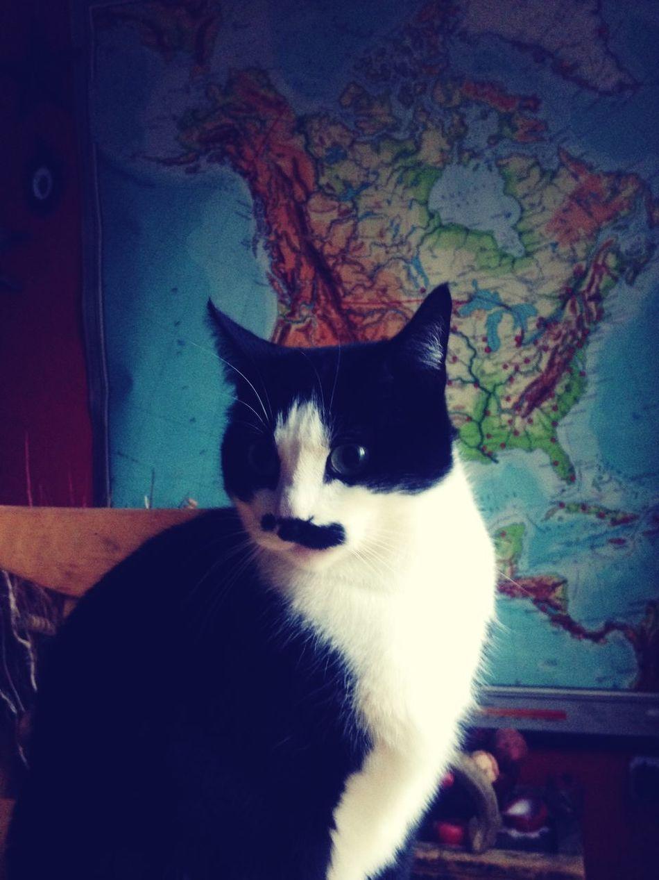 Cats Cool Worldmap Cat