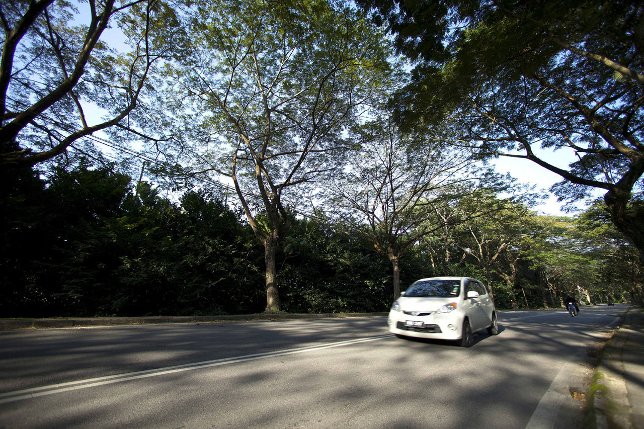 Nature Road Transportation Tree