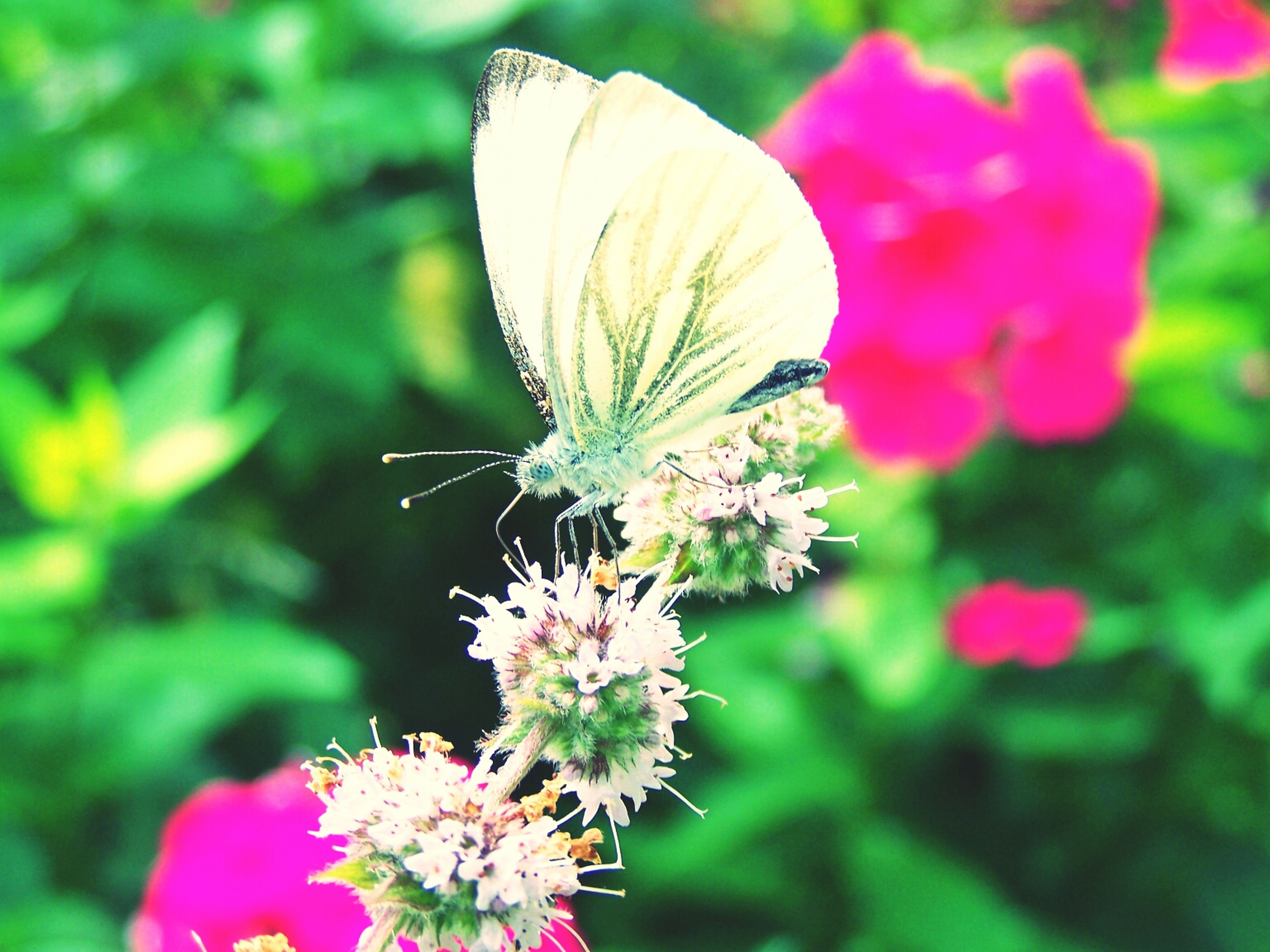 flower, fragility, freshness, petal, growth, focus on foreground, flower head, beauty in nature, close-up, plant, nature, insect, blooming, stem, one animal, in bloom, pink color, blossom, outdoors, day