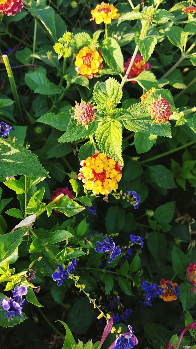 Summer Flowers Blue Pink Lots Of Leaves Green Yellow Purple Small Flowers Cute