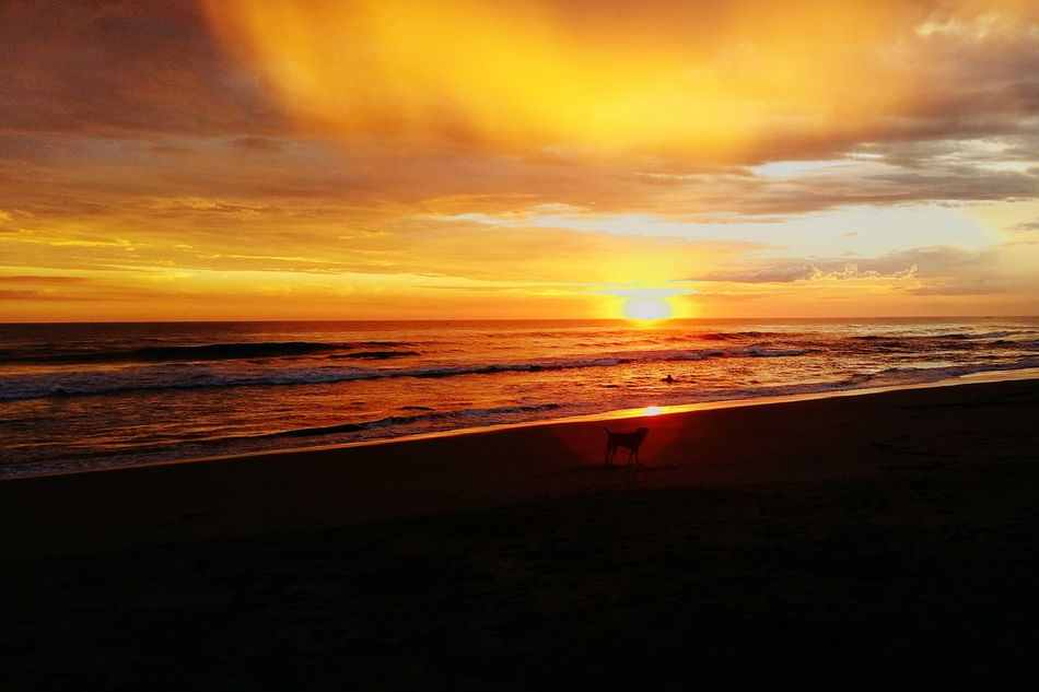 SeaBeach Sunset Sand Dramatic Sky Horizon Over Water Sky Dog Walking Beauty In Nature Tranquil Scene Nature Scenics Water Outdoors Vacations Travel Destinations Idyllic Wave People Day El Salvador Impresionante First Eyeem Photo