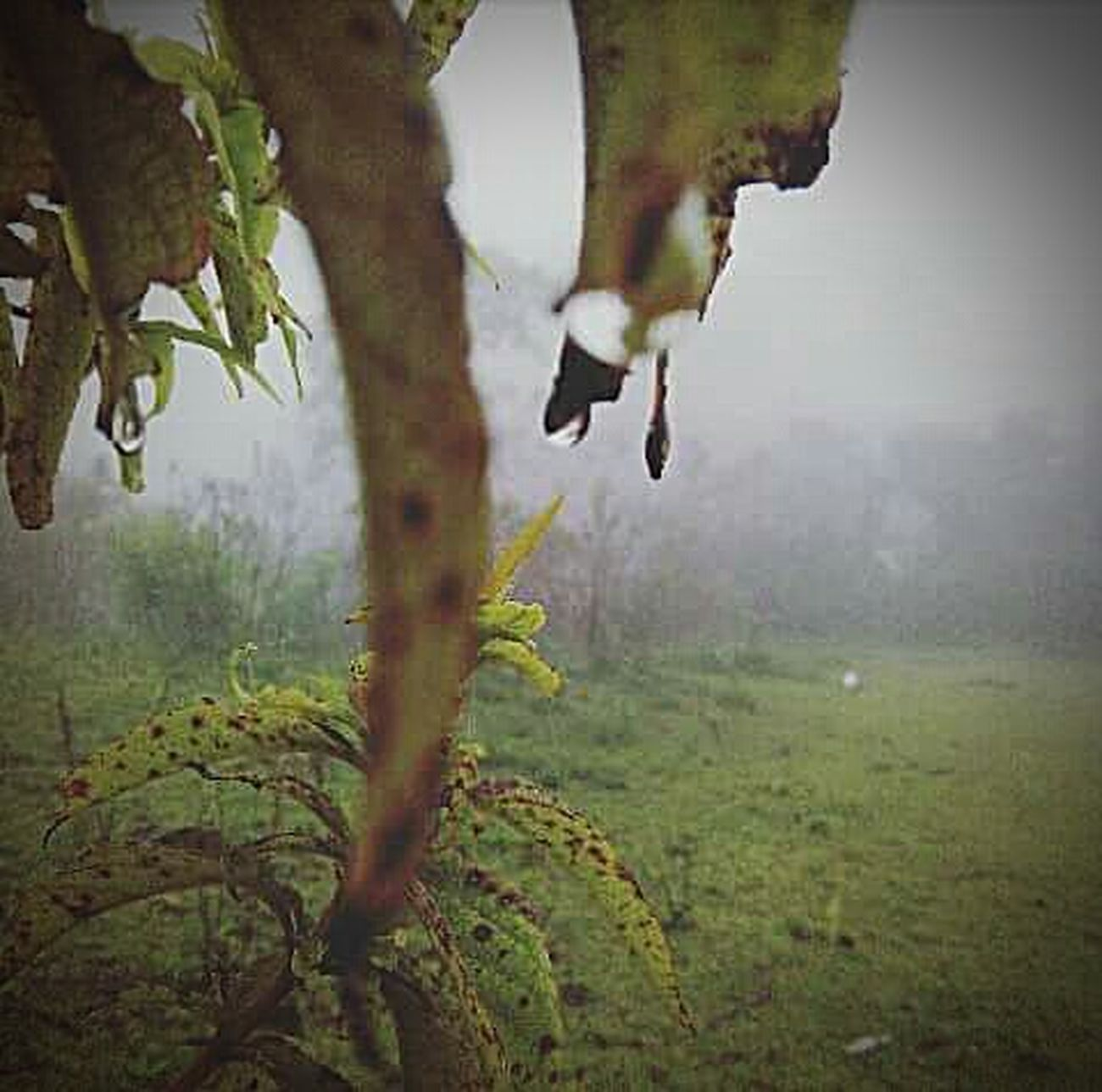 Neblina Unagota Nature Day