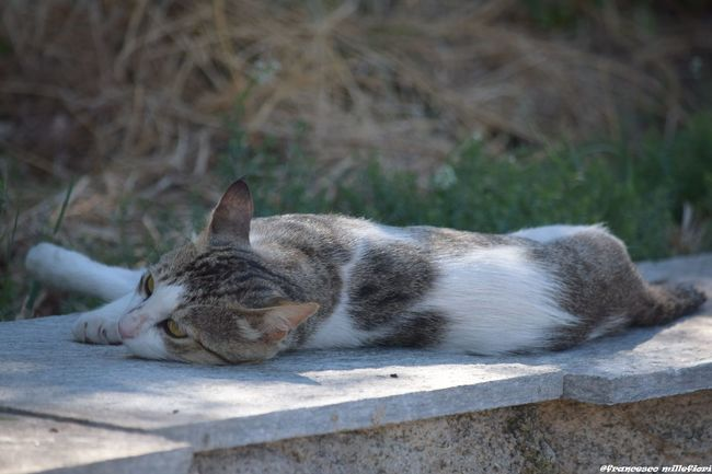 The CAT RELAX Animal Themes Nature Tranquility