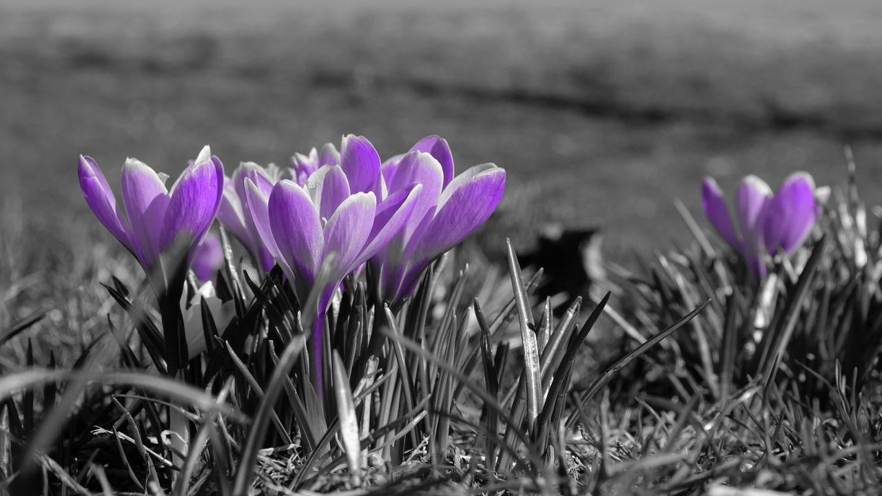 @whitewabbit Central Park Flower Collection Flowerporn Central Park CentralPark Selected Color Eye4photography  Flowers Purple Flower Purple