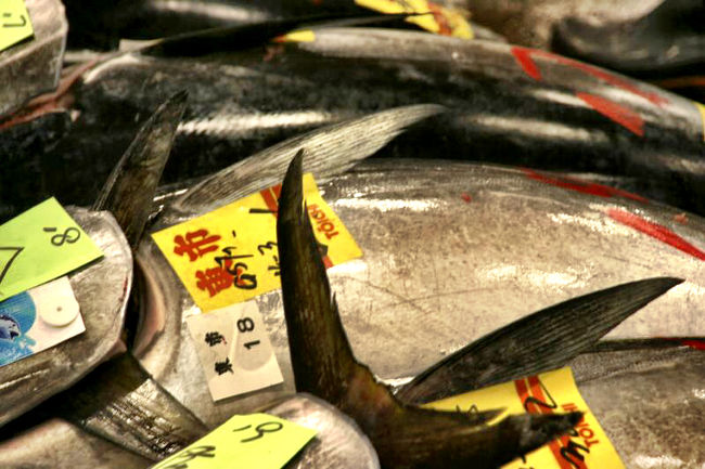 Tsukiji Fish Market Tokyo Tuna Fish Market Tsukiji