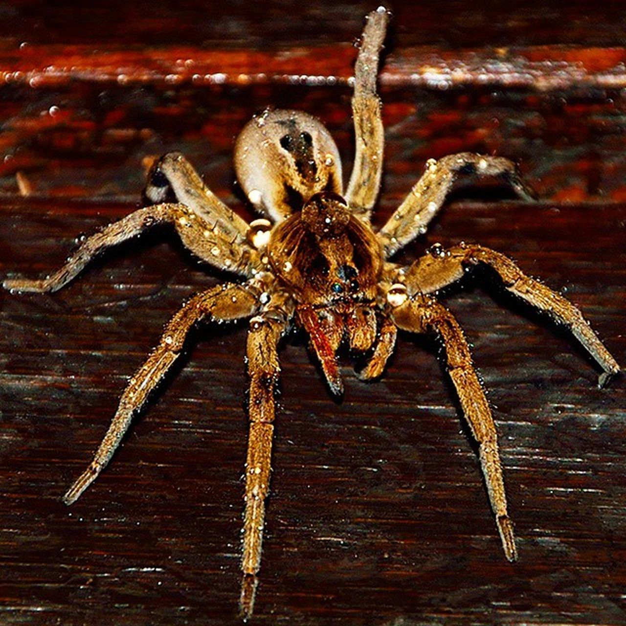 spider, one animal, animal themes, animals in the wild, no people, close-up, indoors, animal wildlife, nature, day