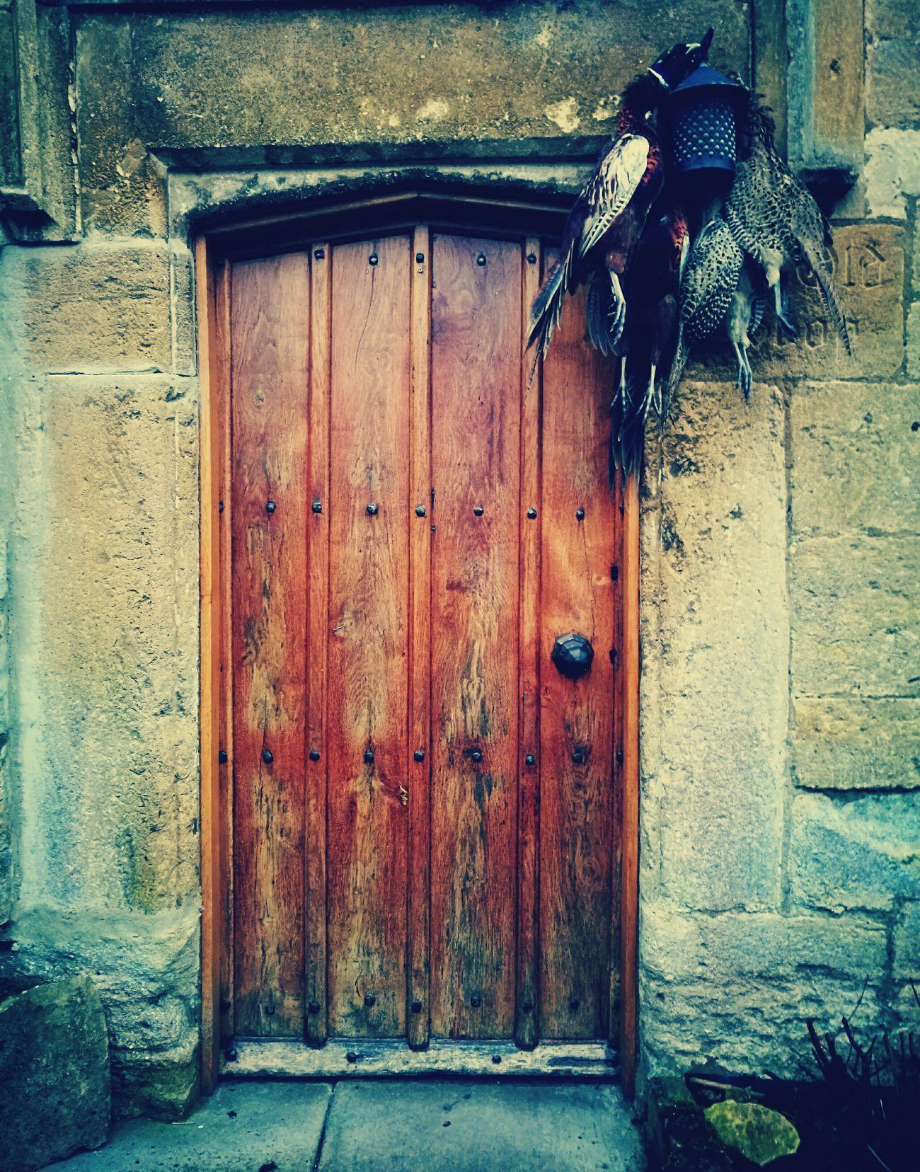 Traditional English door in Bridget Jones country. Pheasants Hunting Tradition Nature VS Man Door Built Structure Building Exterior Outdoors Architecture Close-up Day No People Vintage Stylized Animal Dead Animal Old House Old Building