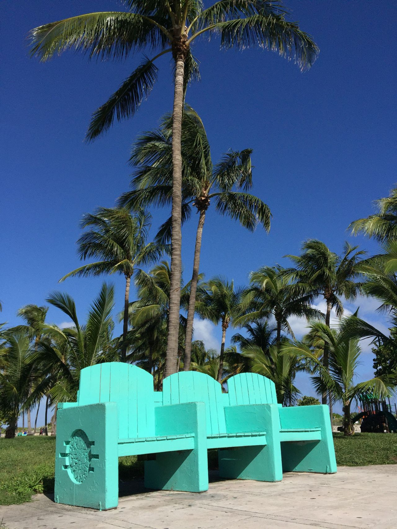 Palm Tree Tree Beach Blue Sand Green Color Sky Growth Nature Clear Sky Outdoors Day No People Beauty In Nature Bench South Beach Iphone6