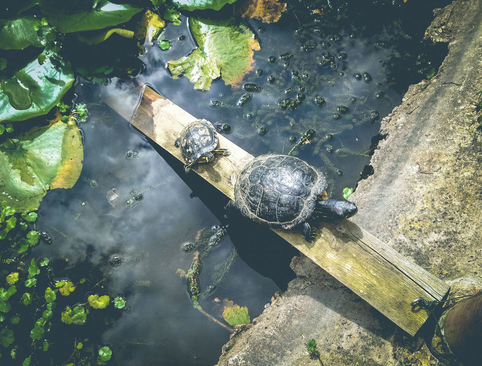 Beautiful stock photos of schildkröte, Animal Shell, Animal Themes, Animal Wildlife, Animals In The Wild