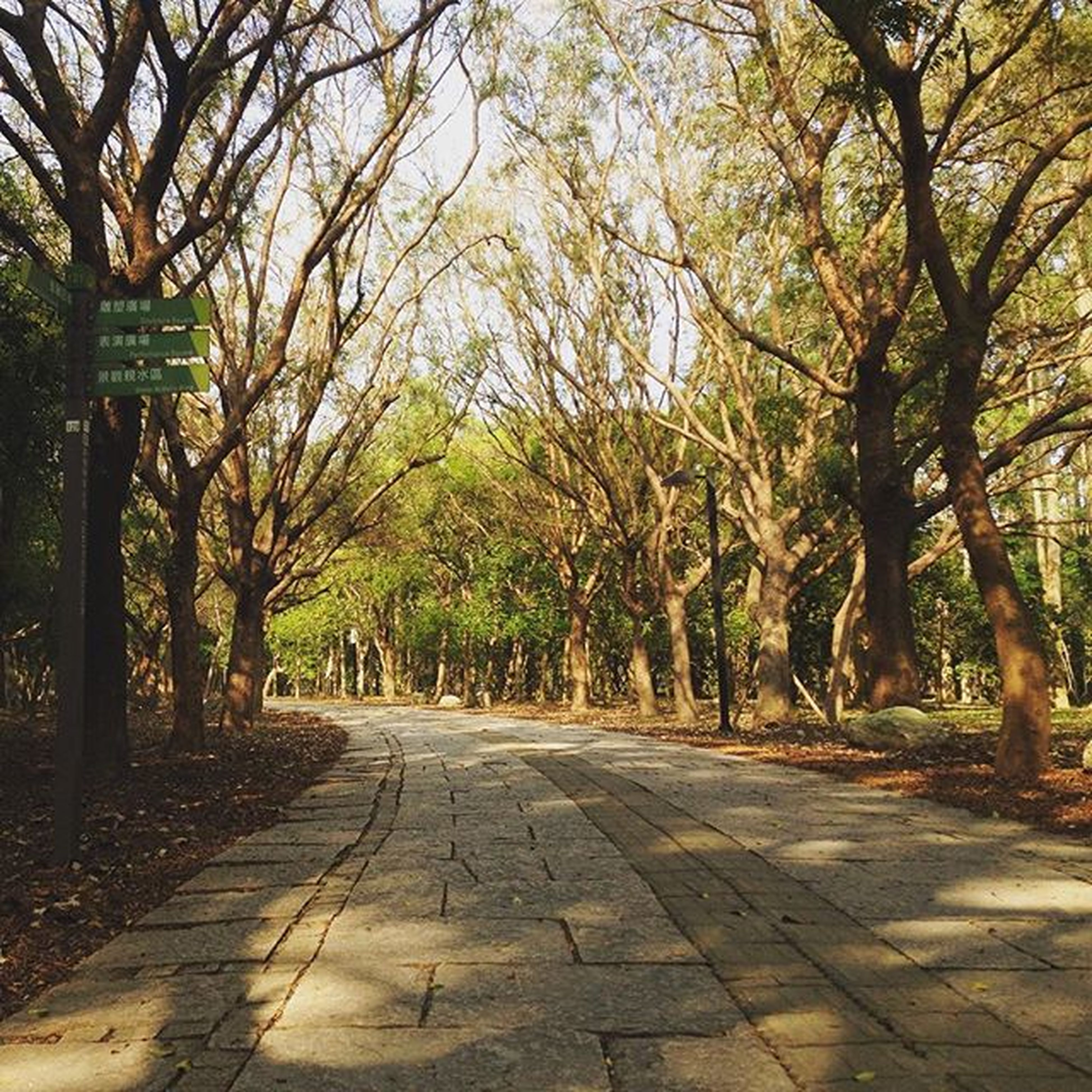 tree, the way forward, treelined, diminishing perspective, footpath, branch, growth, vanishing point, tranquility, road, tree trunk, nature, walkway, empty, street, transportation, tranquil scene, pathway, park - man made space, beauty in nature