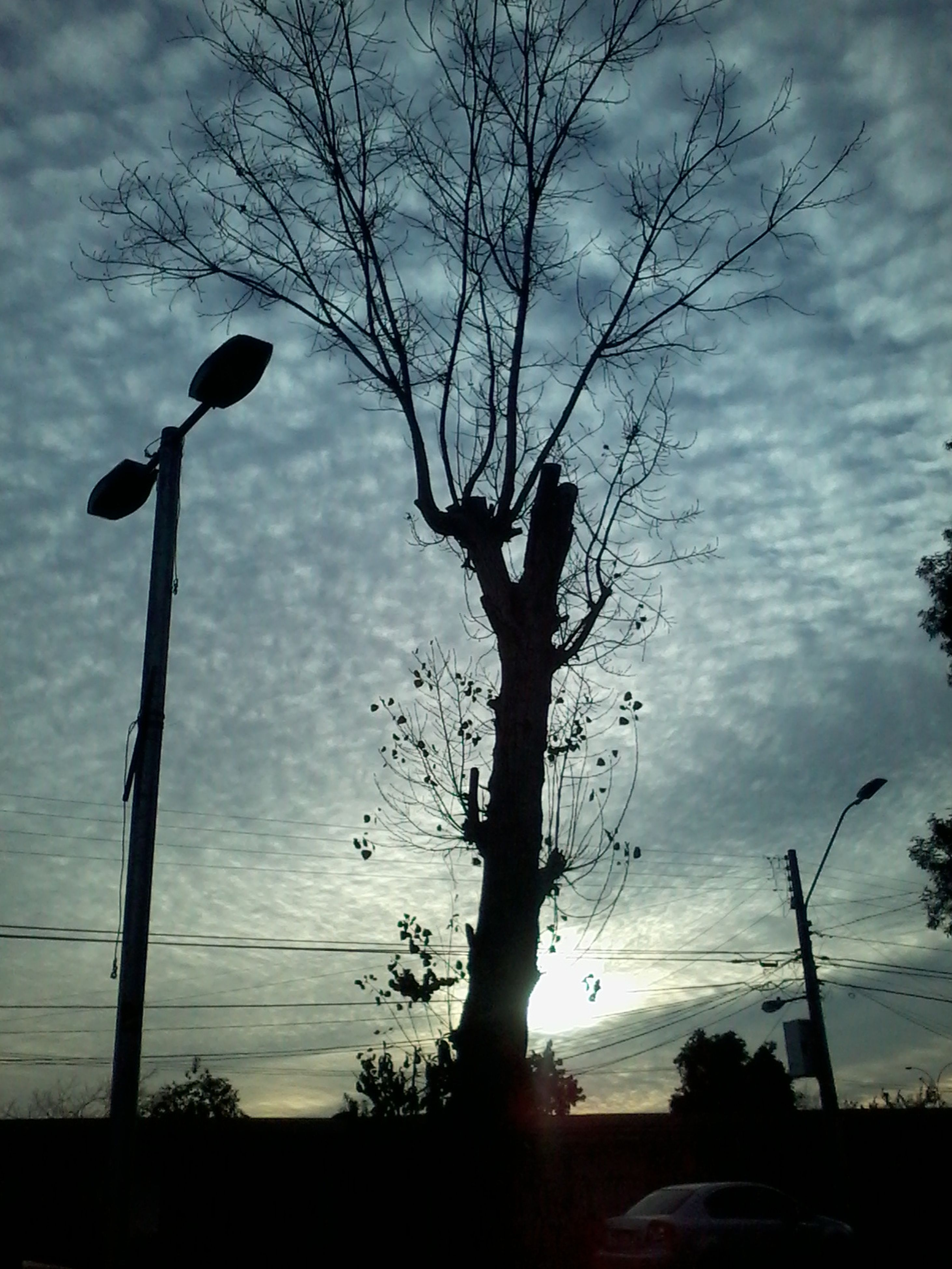 silhouette, sky, bare tree, low angle view, tree, sunset, cloud - sky, street light, cloud, nature, power line, tranquility, cloudy, tree trunk, no people, outdoors, beauty in nature, tranquil scene, pole, scenics, outline, cable, growth, weather