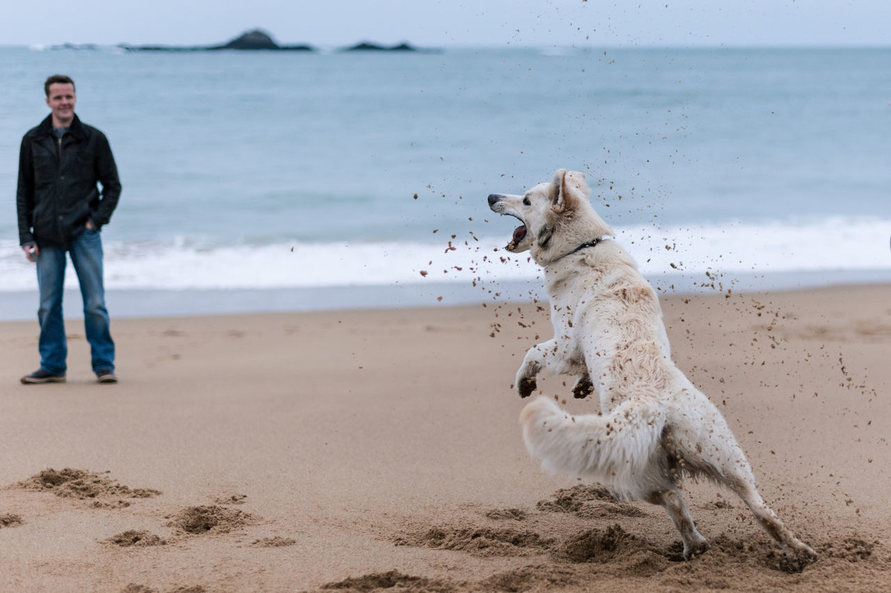 white dog play on beach with an man Animal Themes Beach Beauty In Nature Day Dog Dog On Beach Dog Play Dog Playing Domestic Animals Full Length Mammal Man And Dog Nature No People One Animal Outdoors Pets San Sand Sea Water White Dog