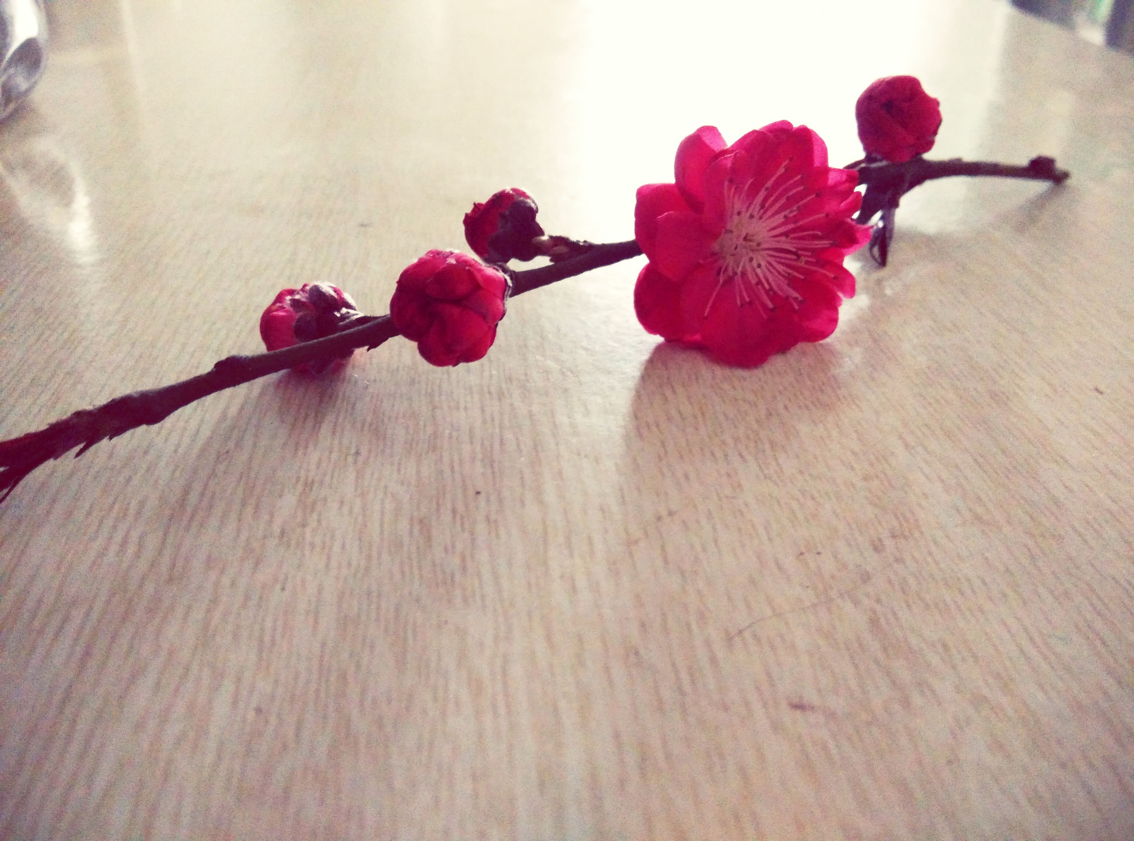 flower, indoors, freshness, red, fragility, table, decoration, close-up, petal, stem, vase, pink color, still life, home interior, no people, wood - material, nature, plant, bud, hanging