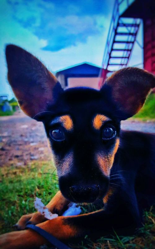 One Animal Looking At Camera Animal Themes Close-up Domestic Animals Portrait Mammal Sky Day Outdoors No People Straypuppy First Eyeem Photo