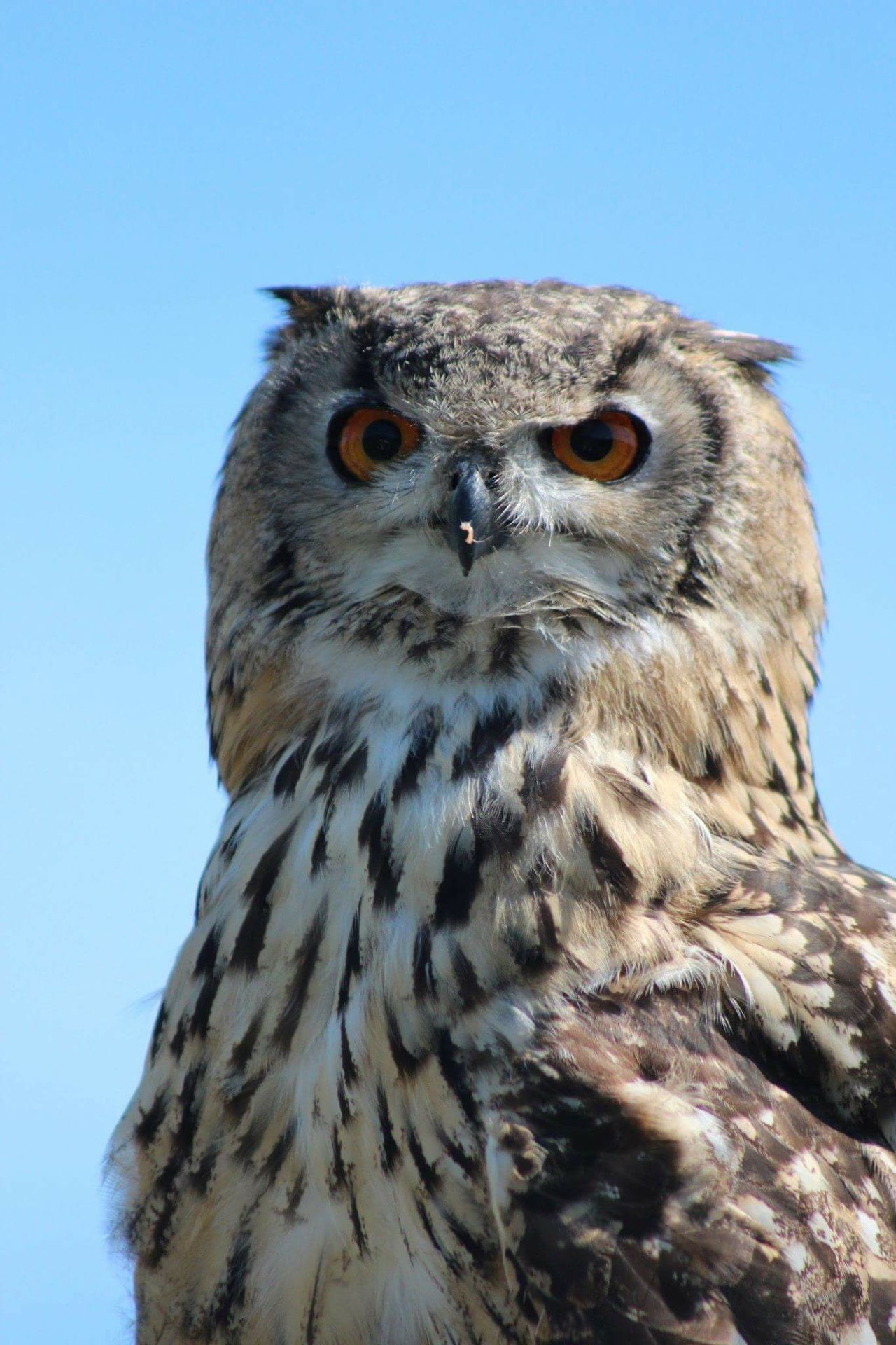 Beautiful stock photos of owl, Animal Behavior, Animal Head, Animal Themes, Animals In The Wild