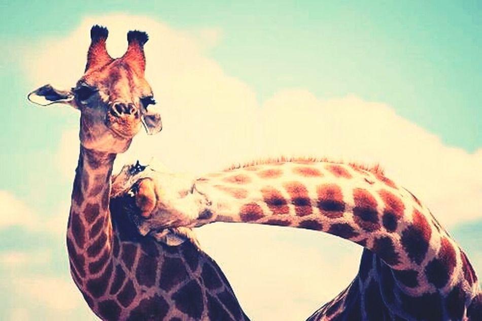 #heeyduuuuude Cute Animals Fun Love lo