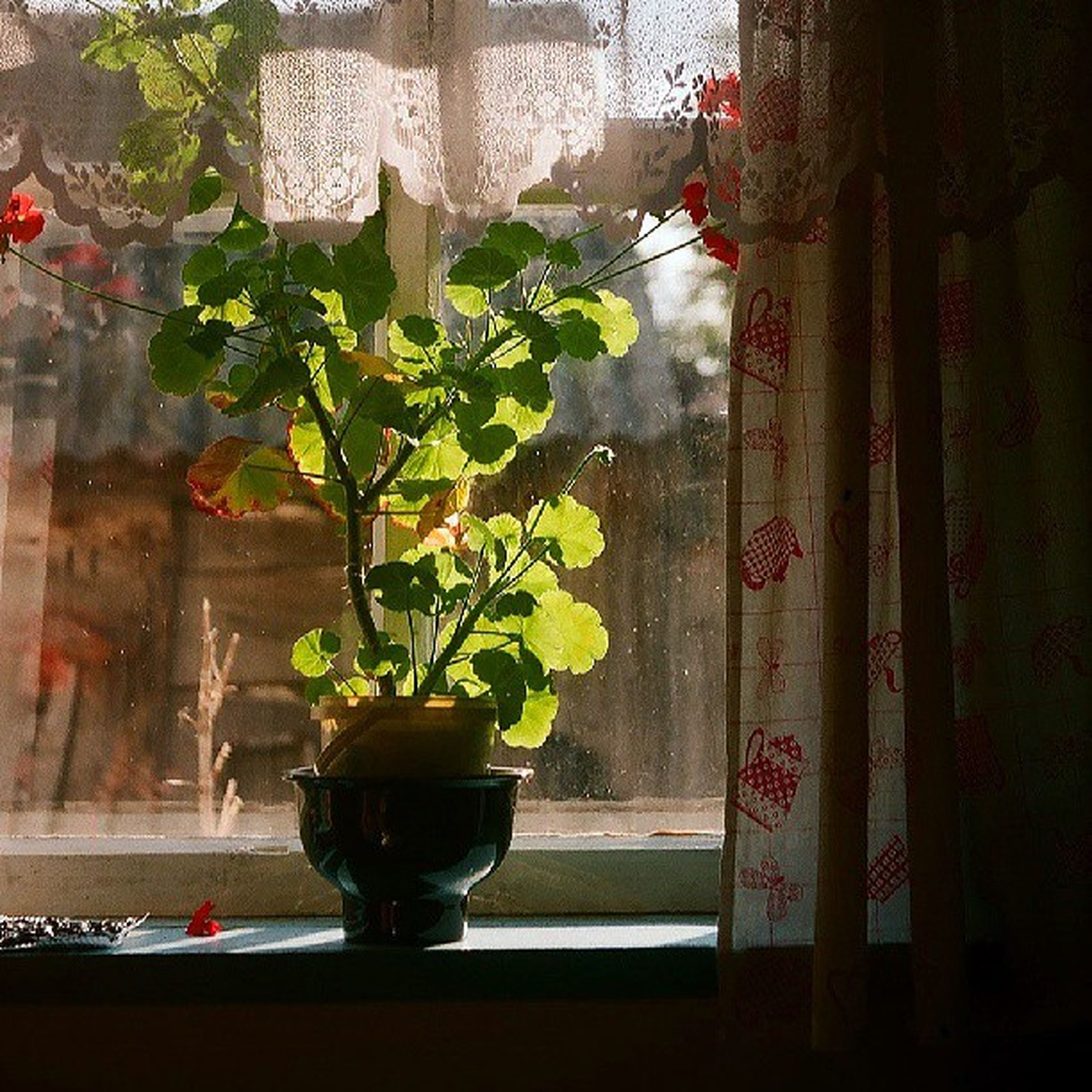 indoors, potted plant, flower, vase, plant, window, growth, window sill, flower pot, home interior, table, glass - material, curtain, wall - building feature, freshness, built structure, transparent, wall, architecture, leaf