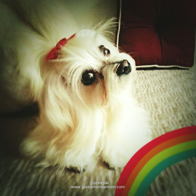 My cute puppy Dog Lover
