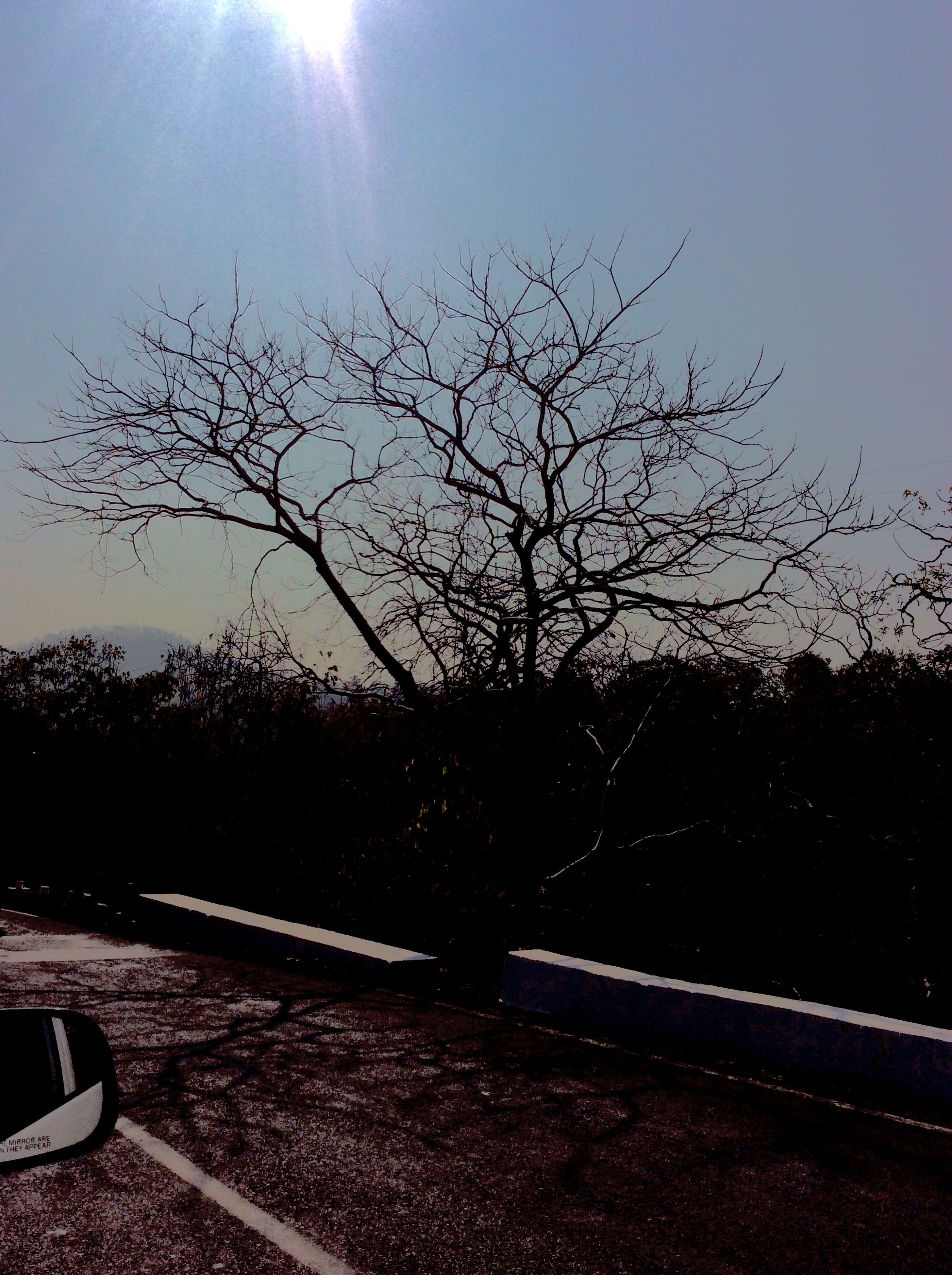 bare tree, tree, transportation, road, sun, clear sky, sunlight, silhouette, sky, tranquility, nature, branch, lens flare, street, sunbeam, tranquil scene, car, no people, outdoors, landscape