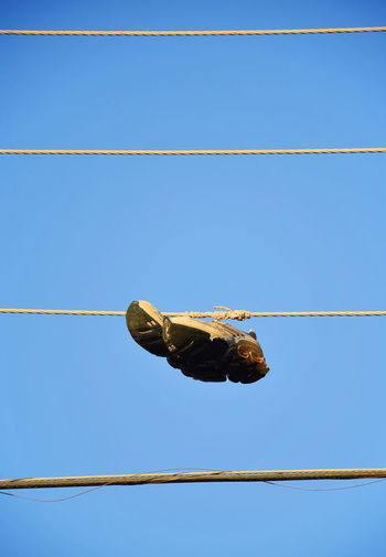 vieja costumbre prevalece Blue Cable Clear Sky Close-up Electric Cable Funny Custom Hang Tenni Low Angle View Old Custom Old Tennis Hanged Outdoors Rare Culture