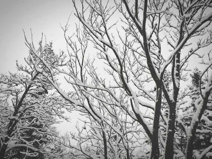 Snow Mountain White Backgrounds No People Outdoors Day Full Frame Low Angle View Nature Branch Beauty In Nature Growth Close-up Sky Tree