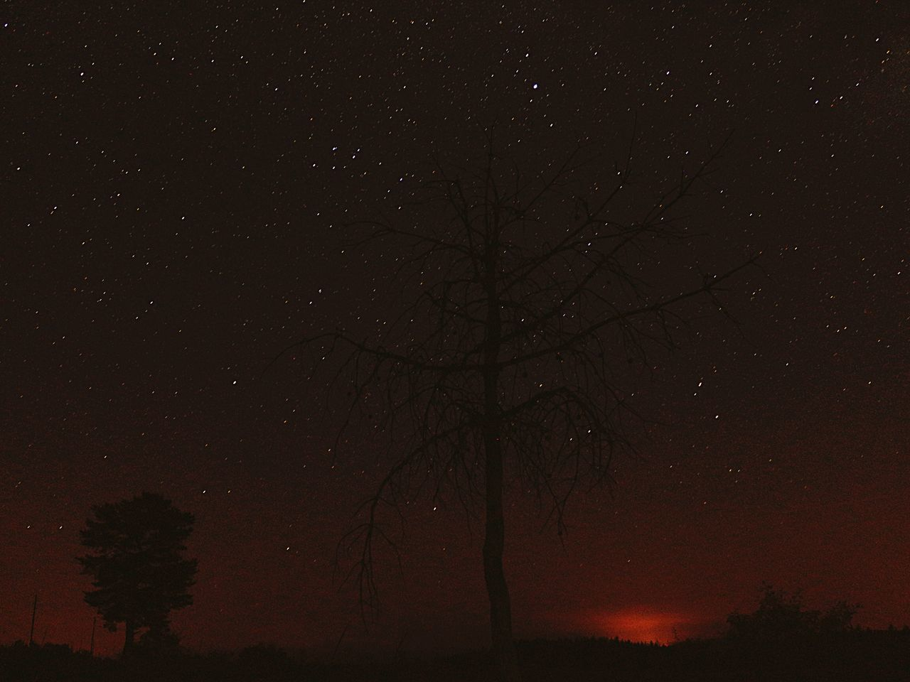 EyeEm Selects EyeEmNewHere Night Tranquility Tree Beauty In Nature Tranquil Scene Star - Space Nature Majestic Scenics Bare Tree Astronomy No People Silhouette Landscape Sky Outdoors Starry Galaxy Constellation