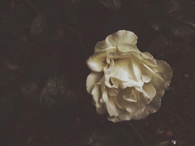 """""""Mỗi người đều có một câu chuyện, không cách nào nói ra, cuối cùng chỉ có thể đem nó thả vào đêm, rồi đối diện với mình mà dốc lòng bày tỏ. Khi màn đêm buông xuống, chính là lúc trái tim con người ta trở nên yếu mềm nhất, cũng là lúc tư niệm điên loạn nhất. Lúc mòn mỏi nhớ nhung một người mới thực sự là cô độc. """" -st Hello World London EyeEm Meetup Connected With Nature Taking Photos Picking Flowers"""