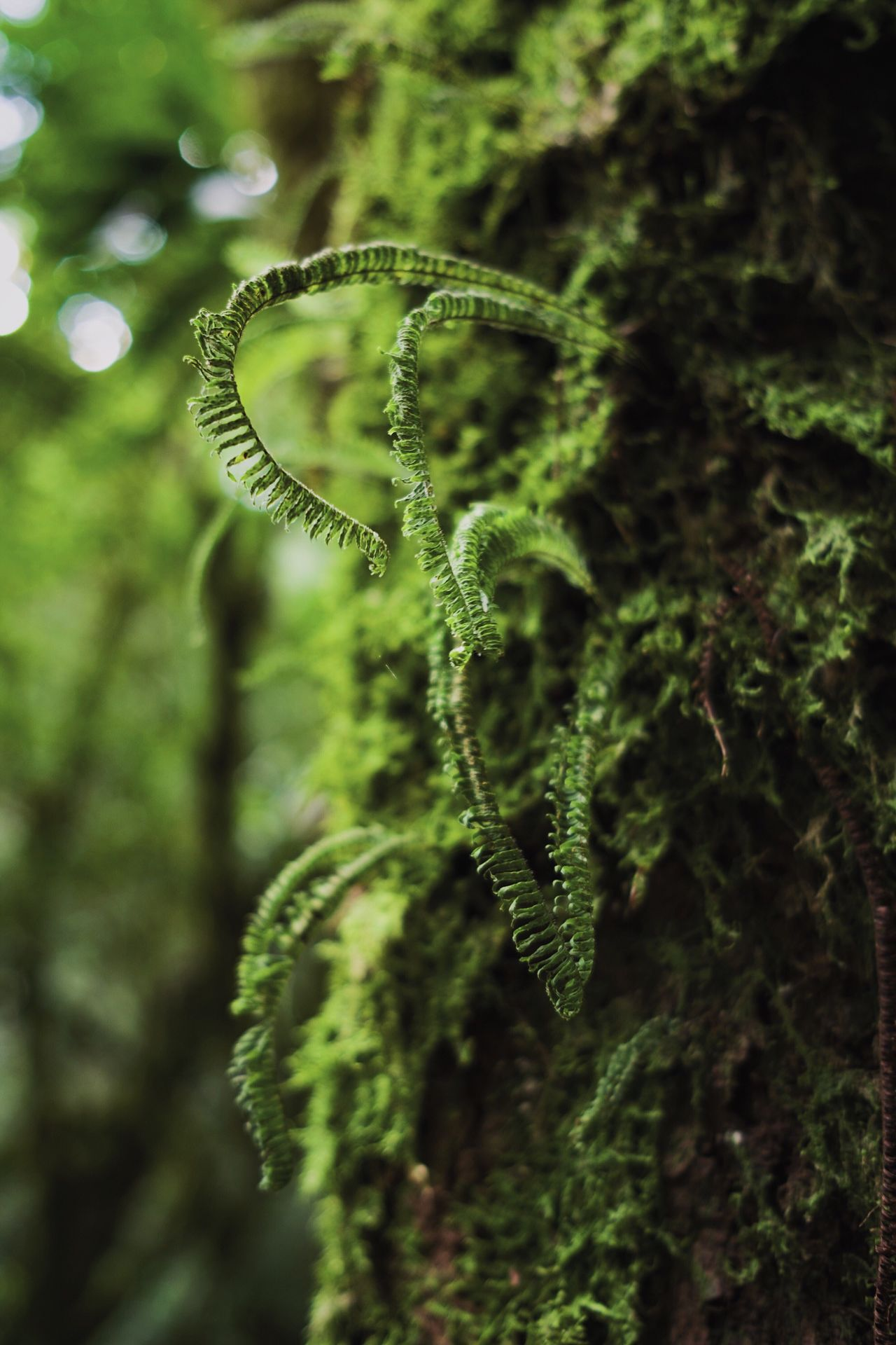 Fern Nature Green Color Focus On Foreground Plant No People Growth Beauty In Nature Outdoors Day Tendril Tree Animal Themes Fragility Close-up