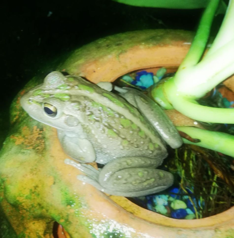 Frog pond likes photo taken Green Color My Garden @my Home Nature
