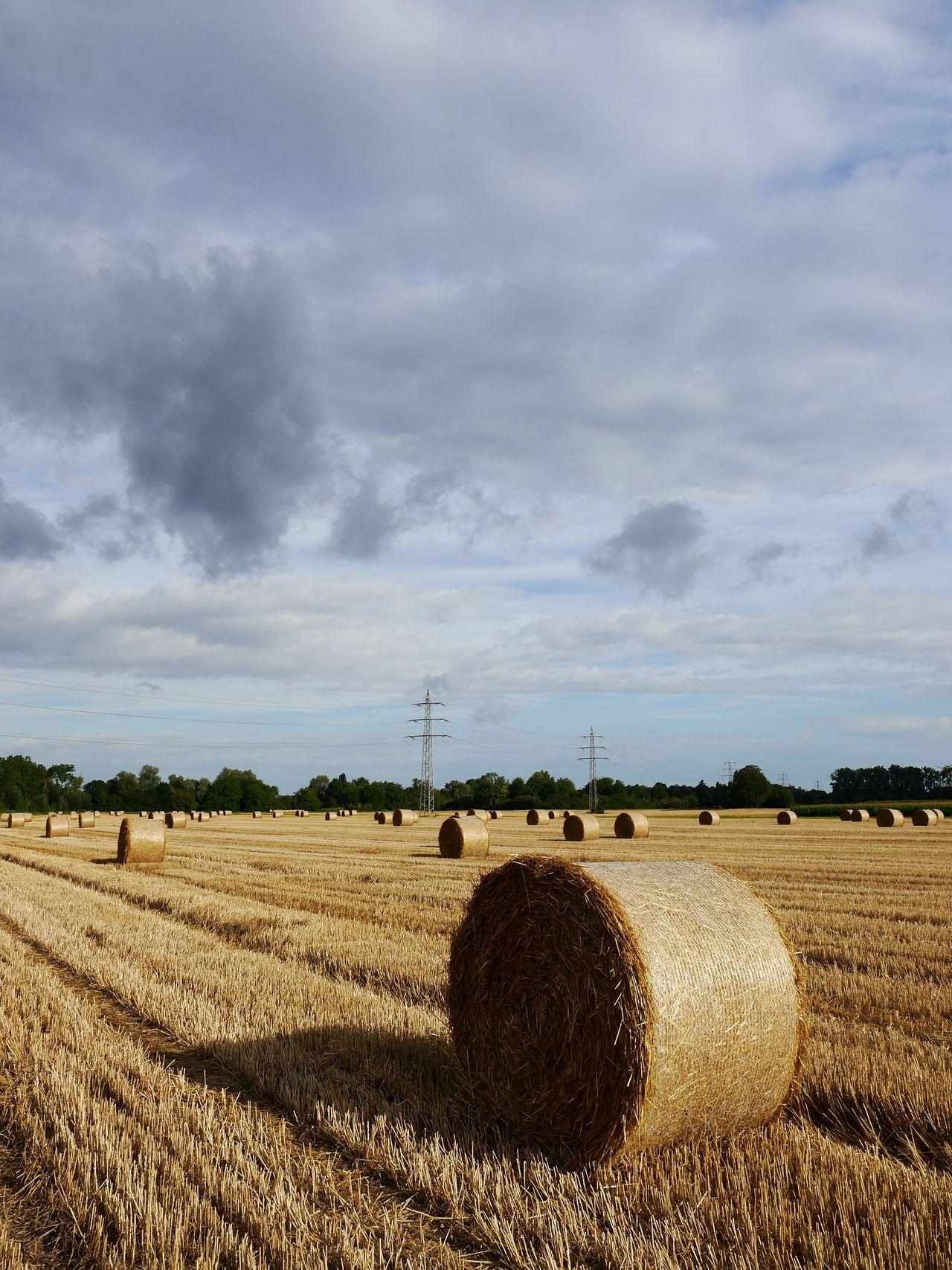 Hay balls // Field Agriculture Rural Scene Crop  Landscape Bale  Cloud - Sky Cereal Plant Sky Outdoors Day Nature No People Beauty In Nature Scenics Storm Cloud Tree