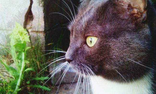 Cat Cats Of EyeEm Taking Photos Cat♡ Grey Sharp Eyed Cute Pets😻 Cute Pets Cat Faded Color