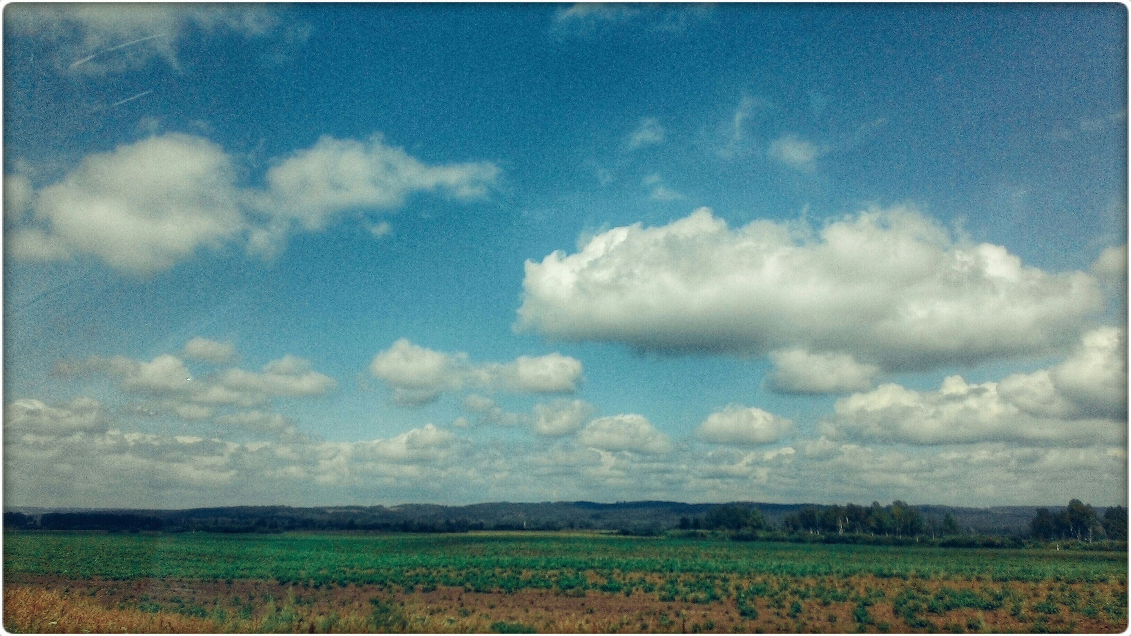field, agriculture, landscape, sky, rural scene, tranquil scene, tranquility, farm, beauty in nature, scenics, nature, growth, crop, cloud - sky, grass, cloud, horizon over land, cultivated land, cloudy, outdoors