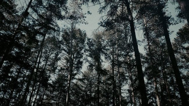 Trees Beauty Nature Russia