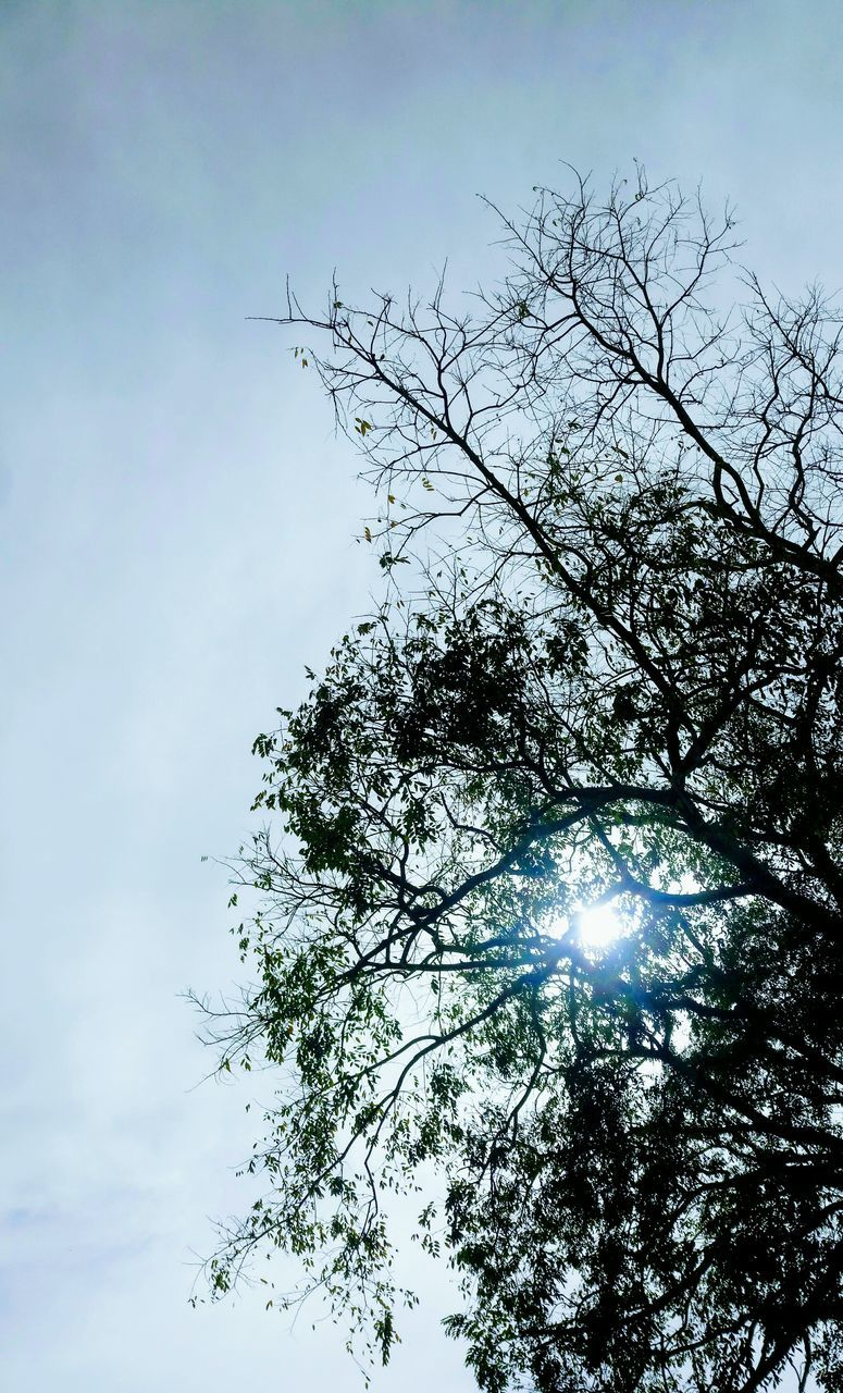 low angle view, tree, sky, nature, lens flare, no people, beauty in nature, day, outdoors, branch, growth, tranquility