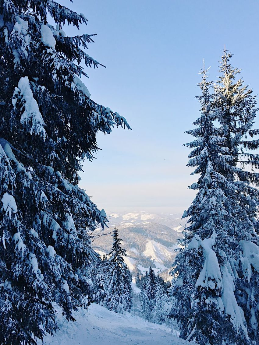 Beauty In Nature Cold Temperature Day Forest Landscape Mountain Nature No People Outdoors Pinaceae Pine Tree Scenics Sky Snow Sunset Tree Winter