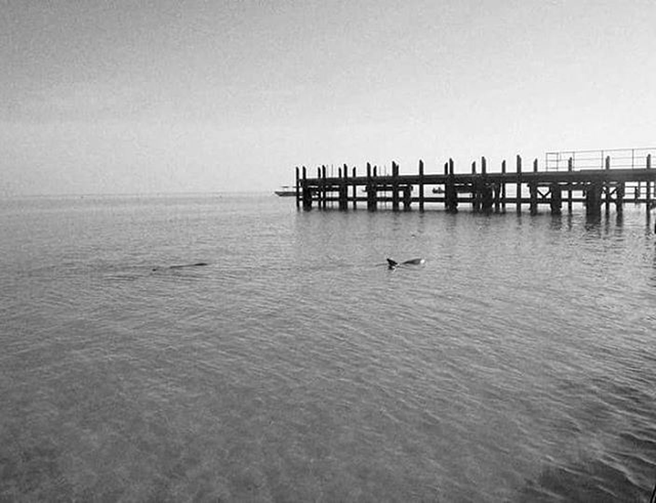 Monkeymia WesternAustralia Australia Mytravelgram Mytrip Backpacker Travelling Travel All_shots F4F Igersitalia Blackandwhite Monochrome Natgeotravel Nature Ocean Wild Dolphin Getty Natgeo Nationalgeographic Landscape Wonderfulplaces