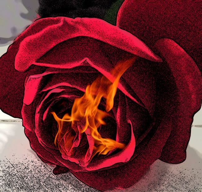 Red Heat - Temperature Close-up Flame No People Burning Night EyeEm Best Shots Freshness Beauty In Nature Blossom Single Flower In Bloom Red Flower EyeEm Nature Lover EyeEmFlower Indoors  Rote Rosen Rote Rose Red