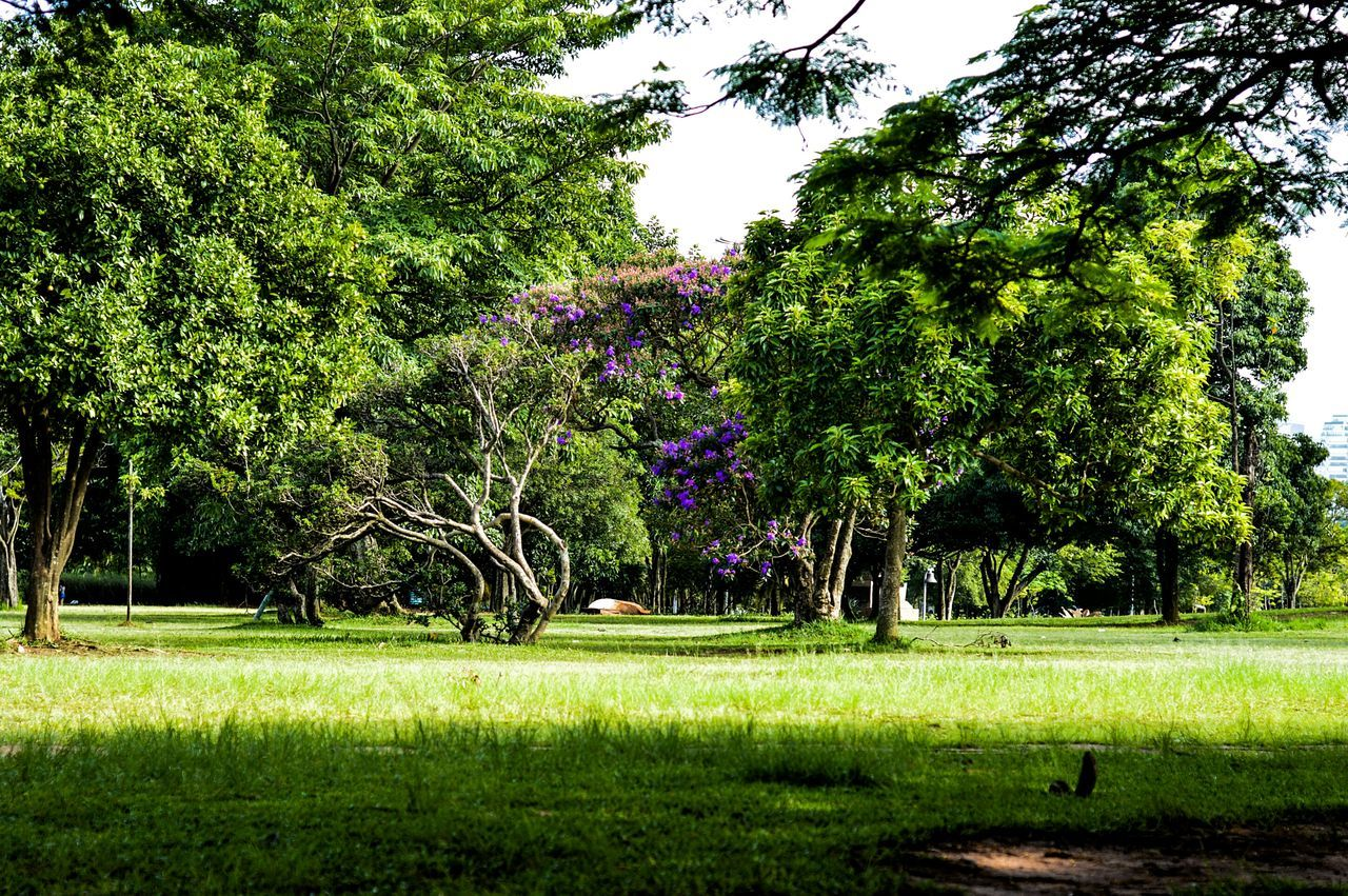 tree, growth, grass, green color, beauty in nature, nature, tranquility, scenics, tranquil scene, no people, day, outdoors, flower, branch, sky