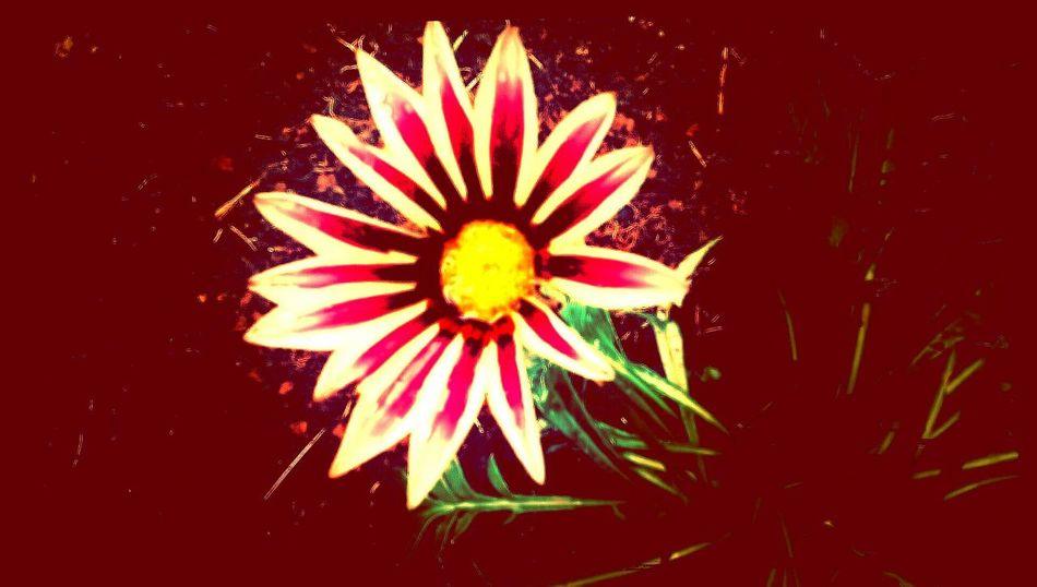 Eye Em Flower Porn Art Taking Photos Colour Explosion Flower Cracker Light Up Your Life Relaxing Flowerporn 2mp Secret Garden