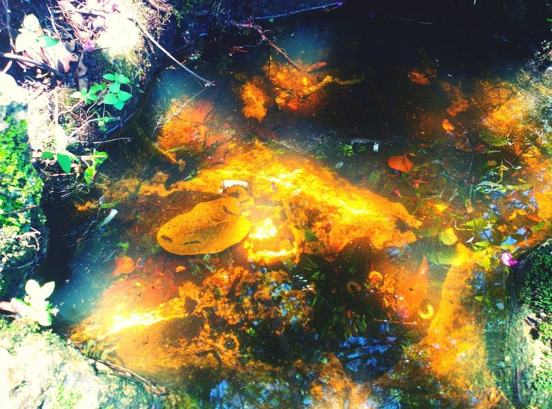 Aguas doradas Multi Colored Beauty In Nature Water Naturelovers Mexicolors Forestphotography Leaves 🍁 Chiapas, México Nature Amazing Lovephotography  Movilephotography Water_collection Water Reflections Gold Water