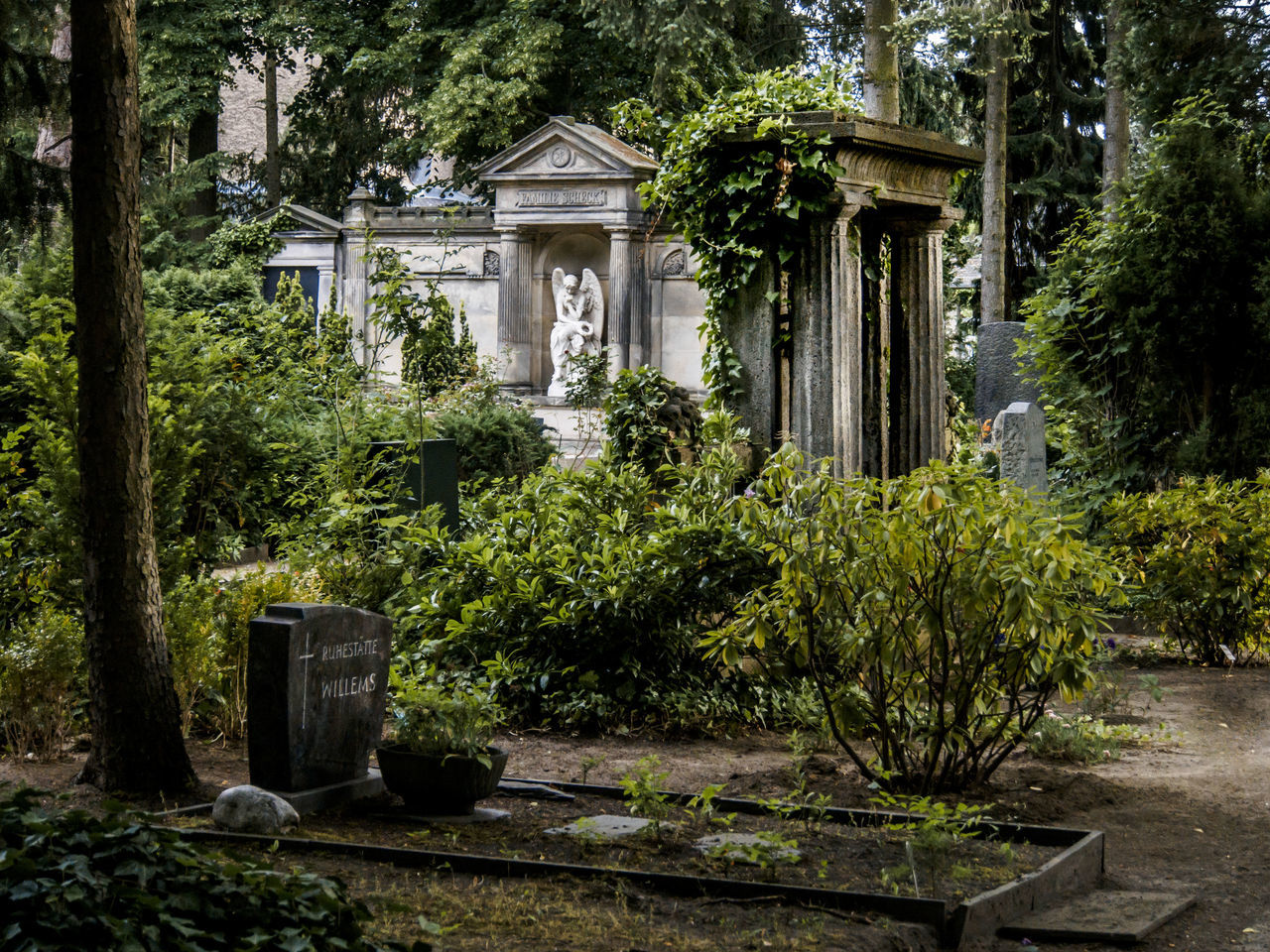 Angel Angel Statue Architecture Built Structure Cementery Graveyard Graveyard Beauty Plant Tree