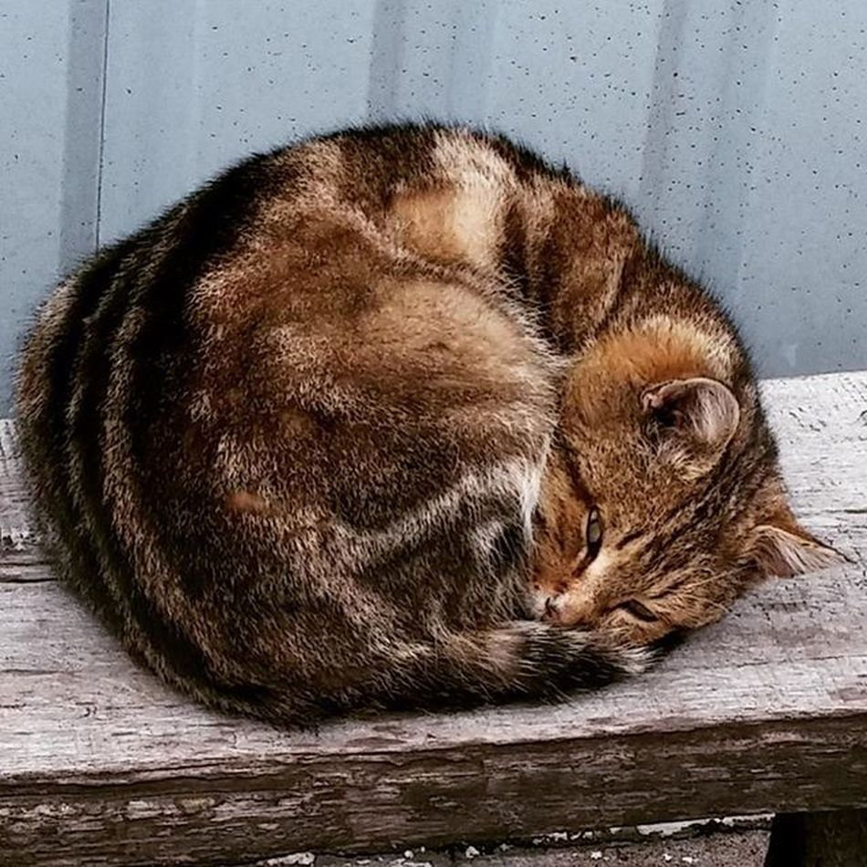 котэ уличное Cat Cats Streetcat мимишность клубочекмеха